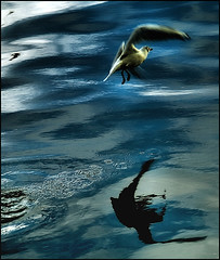 fluir en  vol ( tornare ) - To flow in flight ...