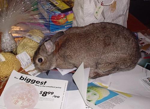 Bunny Foo-Foo