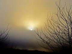 Hasta mi ventana..... (tan.solo_milenia .) Tags: naturaleza sol niebla thebest thegoldengallery maanas theunforgettablepictures concordians flickrslegend cherryontopphotography damniwishidtakenthat inthememoriesbook ~newenvyofflickr~ miasbest fenmenosmetereolgicos