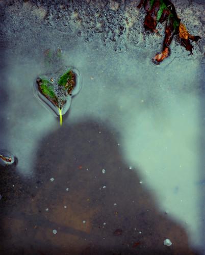 leaf heart.
