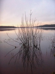 The morning with reflections (FriaLOve) Tags: christmas xmas pink blue trees sky lake plant tree water colors leaves yellow forest reflections finland leaf ruovesi nsijrvi mywinners vosplusbellesphotos frialove