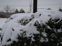 12/23/2008 4:09pm