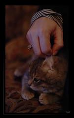 cache cache1 (-Pi- ( Mal VALLAT )) Tags: baby animal cat nikon chat minou minette chaton douceur caresse d80