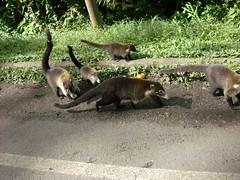 Vacaciones 2008 - La Fortuna San Carlos - Costa Rica (by mdverde)