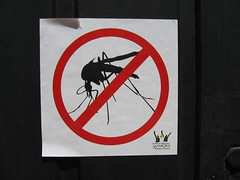 no dengue here