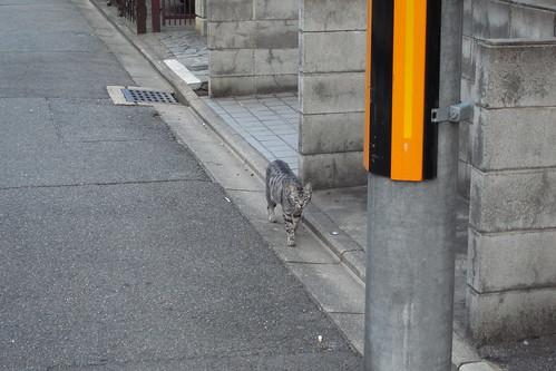Today's Cat@20091014