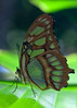 """Van2011 - aquar - butterfly 03 • <a style=""""font-size:0.8em;"""" href=""""http://www.flickr.com/photos/30765416@N06/5797579741/"""" target=""""_blank"""">View on Flickr</a>"""