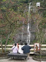 2007三月到烏來賞落櫻