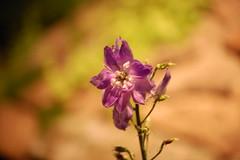 Flowershow2008074 (bbroom1972) Tags: delphinium