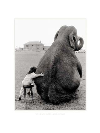 Elephant and me