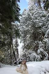 DSC01300.jpgMt. Rainier doll 3-08 (portugita_norton) Tags: snow washington doll mtrainier livingdoll