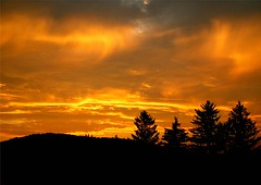 Sky On Fire (Stanley Zimny) Tags: trees sunset sky orange nature pine silhouett naturesfinest blueribbonwinner platinumphoto unature