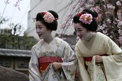 Greeting a customer (abbey j) Tags: japan cherry spring kyoto blossom maiko geisha bow  sakura  kimono obi gion shirakawa takahiro japn  kotoha