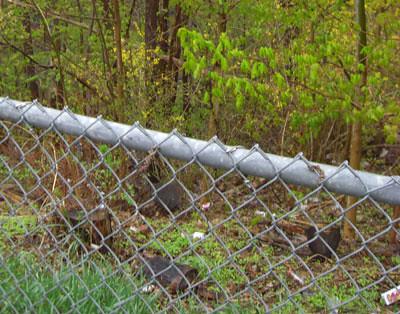 Litter-strewn, inaccessible ravine