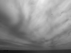 -- (tartalom) Tags: boat gulls irishsea southwesterly tartalom christophersweeney