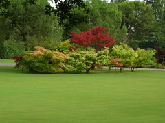Parco Sigurt a Valeggio sul Mincio (goldmark46) Tags: macro di fiore asiago