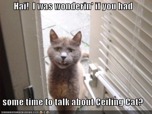 funny-pictures-cat-door-talk-ceilin
