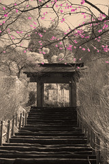 Pink Plum Blossoms in Kamakura (aeschylus18917) Tags: flowers trees sky flower tree nature grass japan garden season landscape ir temple japanesegarden spring nikon scenery seasons d70 nikond70 blossom kamakura blossoms plum surreal infrared bloom   ume kanagawa plums  1870mm prunus   plumblossoms japaneseapricot meigetsuin  rosaceae  kanagawaken   1870f3545g   mume prunusmume chineseplum kanagawaprefecture kamakurashi meigetsuintemple  kamakura nikkor1870f3545g hydrangeatemple danielruyle aeschylus18917 danruyle druyle    1870mmf3545gifdx nikkor1870f3545gdx