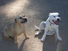 Eddie and Winnie (Moo-ska) Tags: family pets budgie staffordshire