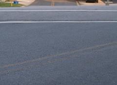 Pavement, Dale Drive & Piney Branch Road (Silver Spring, MD) - by takomabibelot