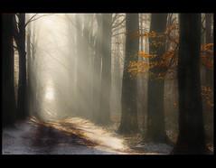 Heaven on earth (♥ Damona-Art •.¸¸.•´¯`•.♥.•´¯`) Tags: morning trees winter leaves woods nikon raw shadows belgium sunrays forests sunbeams roq bookofsecrets meerdaalbos thesecretlifeoftrees