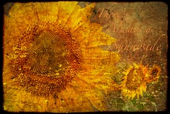 There's Always a Sunnyside.jpg (YOSEMITEDONN) Tags: textures sunflowers sensational ghostworks proudshopper damniwishidtakenthat dragondaggerphoto heavenlycaptures