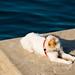 Port Nouveau pier dog