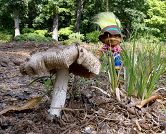 A Gold Mushroom + Hillbilly Troll (Robert Lz) Tags: mushrooms fungi fungus northgeorgia iamblessed robertelzey robertlz september2008 olympussp570uz hillbillytrollbyruss agoldmushroomhillbillytroll