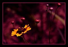 cadrageDSC_2804 (claudedelrieu21) Tags: macro fleur amazing fabulous pictureperfect damncool smorgasbord masterclass naturesfinest blueribbonwinner supershot amazingtalent amazingshot flowerotica flickrsbest fantasticflower fineartphotos masterphotos abigfave nikoniste platinumphoto anawesomeshot impressedbeauty flickrbest ultimateshot flickrplatinum ultimatshot superbmasterpiece naturefinest infinestyle diamondclassphotographer flickrdiamond ysplix ilovemypic flickrelite theunforgettablepictures masterphoto overtheexcellence macromix excellentphotgrapherawards theperfectphotographer floweria goldstaraward naturemasterclass macroflowerlovers montijoverdeamarelo excellentsflowers top20vivid superbmacroflowers natureselegantshots natureelegantshots thepoweroftheflower auniverseofflowers awesomeblossoms