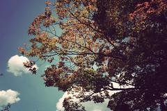 (Earl+) Tags: old tree film japan nikon kyoto looking arashiyama 京都 嵐山 mainland d40 内地