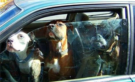 perros_coche_antirrobo_autofm