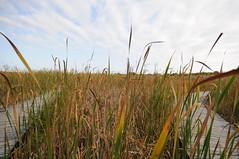 Marsh (Vox Sciurorum) Tags: massachusetts plumisland parkerrivernationalwildliferefuge sigma1020mmf456exdc
