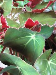 IMG_4775 (nuschu) Tags: florafauna