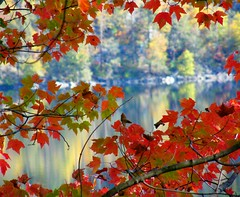 Autumn To and Fro (Stanley Zimny) Tags: park autumn trees red lake reflection tree fall nature water colors leaves automne catchycolors leaf pond colorful colours dof seasons natural fallcolors autumncolors fourseasons reflexions autumnal colorexplosion 4seasons sterlinglake natureselegantshots 100commentgroup