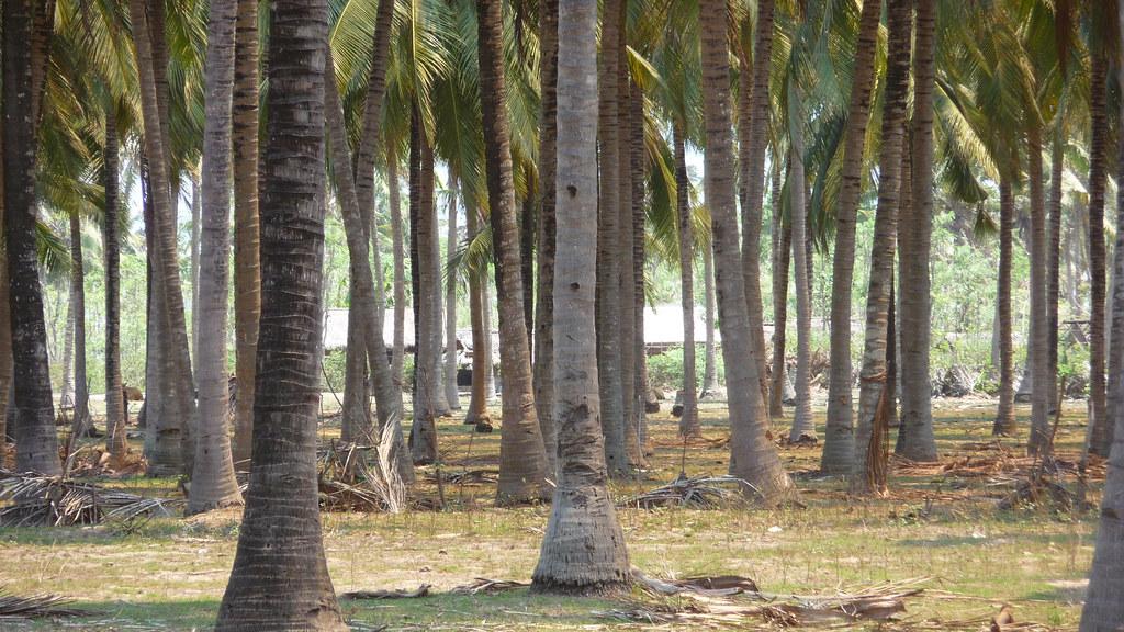 ['Lombok.', ' palm tree']
