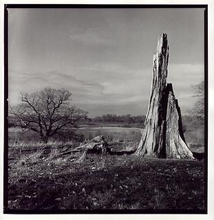 'Lightning-Tree'