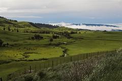 IMG_2449-01 (peterjwaldeck) Tags: newzealand hawkesbay