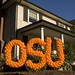 Oregon State University Pride!