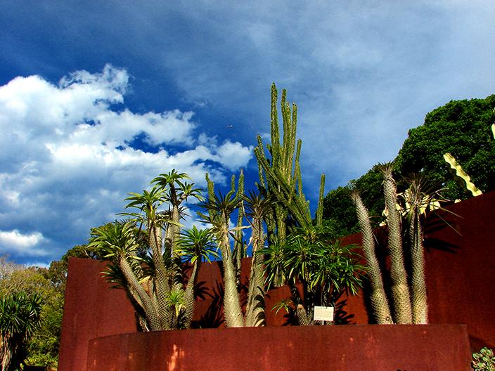 Royal Botanic Gardens Sydney - Succulent Garden (Image Heavy) 3009420709_94e8964321_o