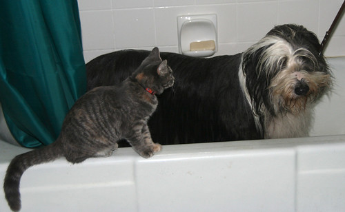 Tabitha Supervises the Bath