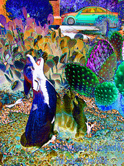 Party Time (phil_sidenstricker) Tags: cactus abstract art digitalart surreal statues explore inverted coyotes strangeworld colorsaturation mindseye explored donotcopy colourmafia proudshopper proudexcellence awardtree queencreekazusa digitalartfx apretentioussystemofheteroducks indiiferent