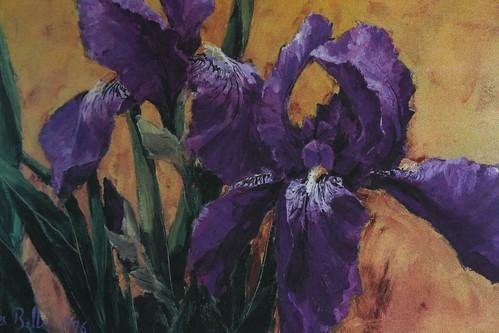 The Artistic Iris