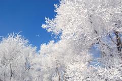 Cold river fontanesia (Freedom.z) Tags: topshots natureselegantshots panoramafotogrfico
