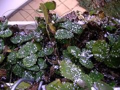 erster Schnee 2008