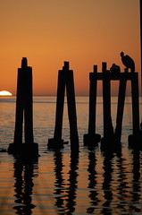 Gazing at glory (MettaMomma) Tags: sunset sky orange sun reflection sol water lines birds animal silhouette soleil florida pelican ciel piling avian couchedesoleil stmarkswildliferefuge narranja