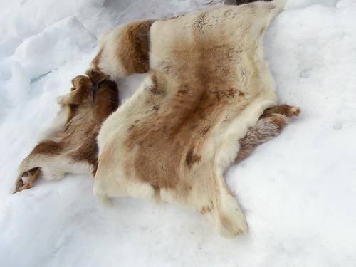 Snow & Reindeer Seat