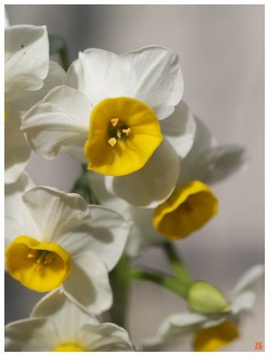 Flowers 081231 #01