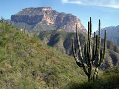 Copper Canyon near Batopilas