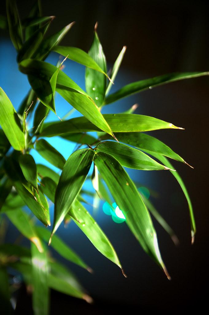 048/365 bamboo