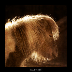 Sadness (Philipp Klinger Photography) Tags: light portrait white black eye texture animal sepia germany fur deutschland sadness zoo hessen sad frankfurt coat pony shetland hesse dcdea